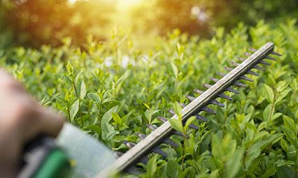 Garden Pruning, Mulching Services