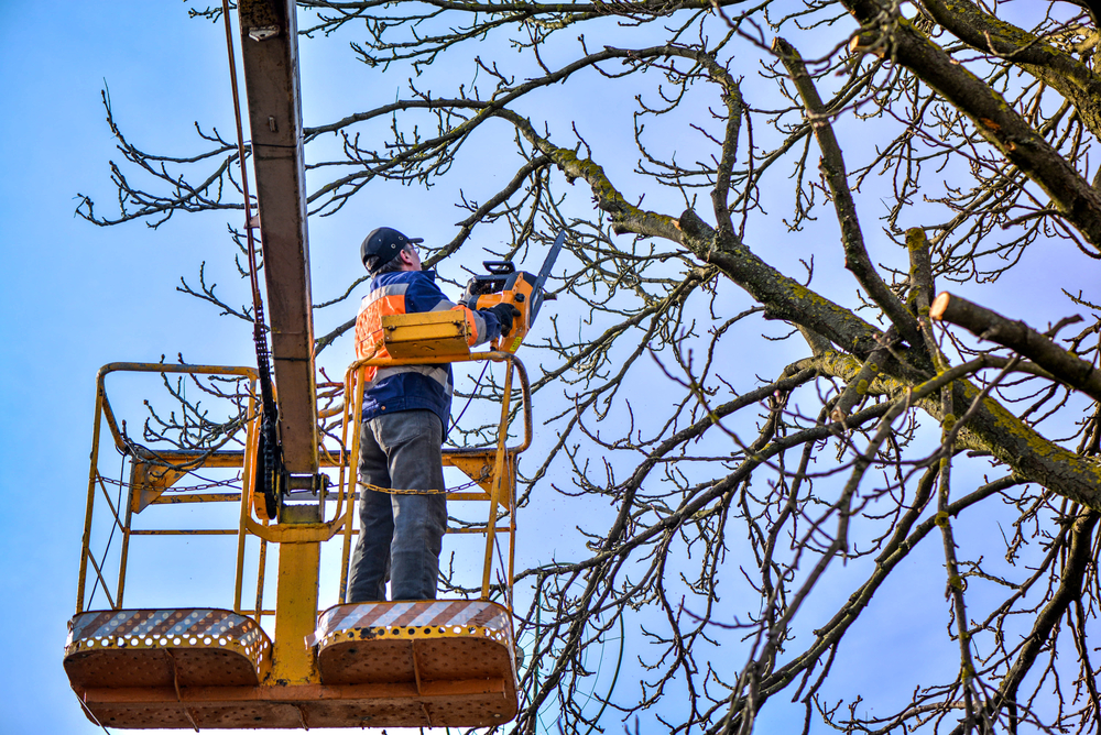 tree trimming services Perth