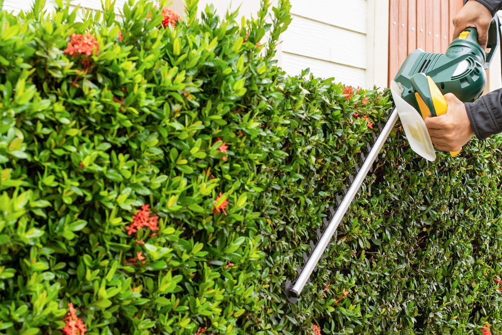 Hedge Shaping Services Girrawheen, Greenwood