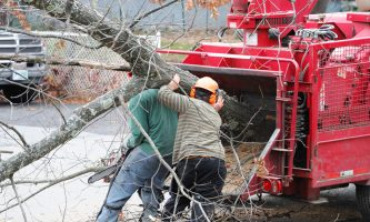 Tree Removal Services Perth