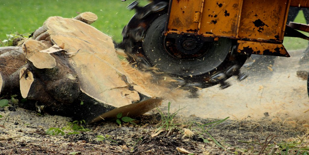 tree stump grinding removal services