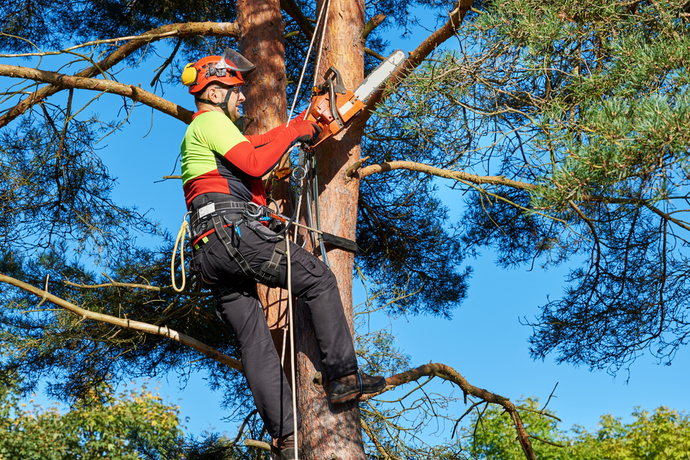 Tree Cutting Services Perth