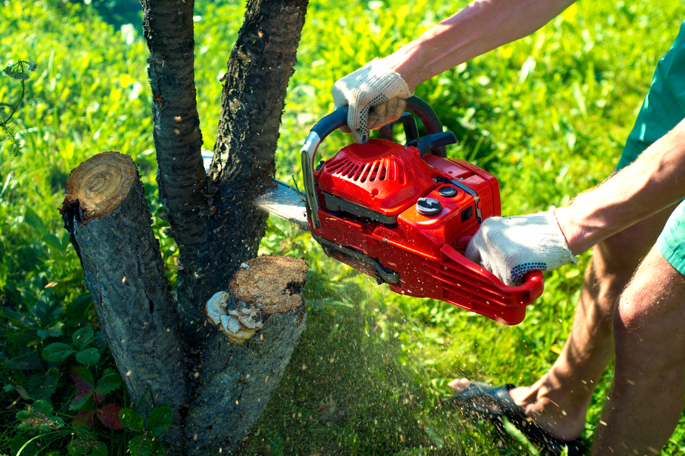 Top 6 Reasons To Call An Arborist For Tree Removal